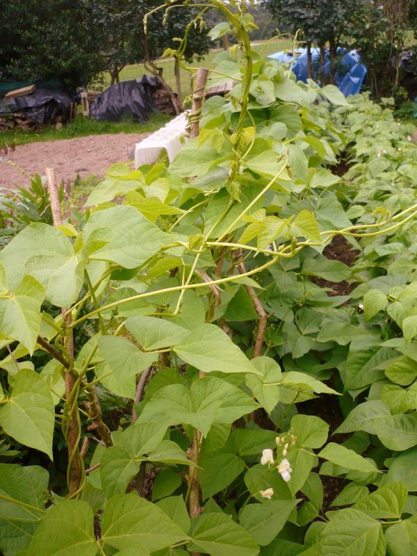 Au jardin le blog de titanique for 6 jardin guillaume bouzignac