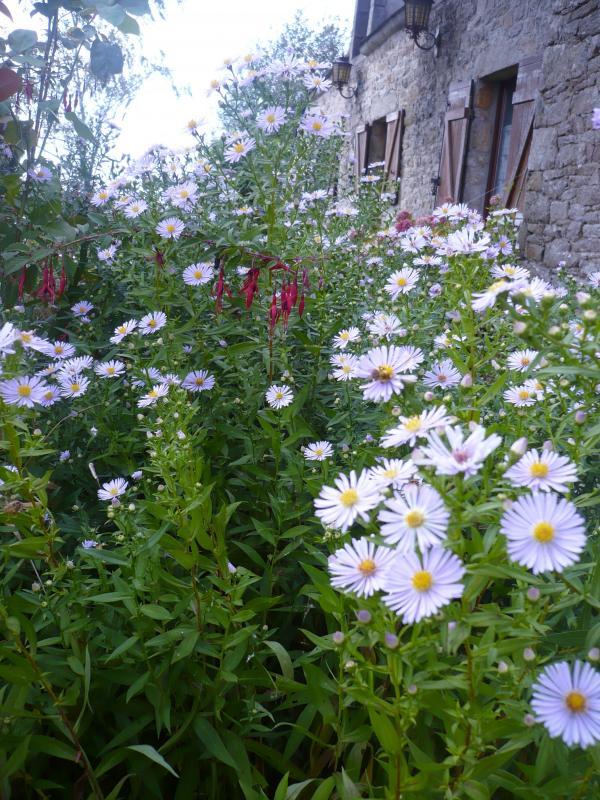Balade au jardin le blog de titanique for 6 jardin guillaume bouzignac