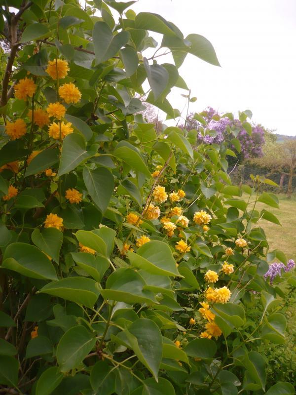 Les fleurs au jardin le blog de titanique for Au jardin by les amis