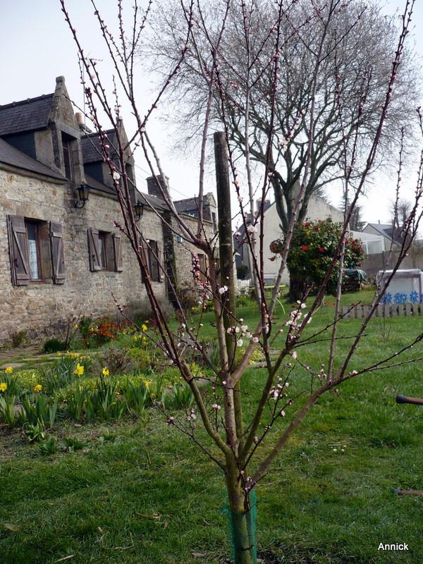 Au jardin 11 mars le blog de titanique for Au jardin des sans pourquoi translation