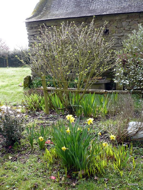 Au jardin 11 mars le blog de titanique for Ca vient du jardin