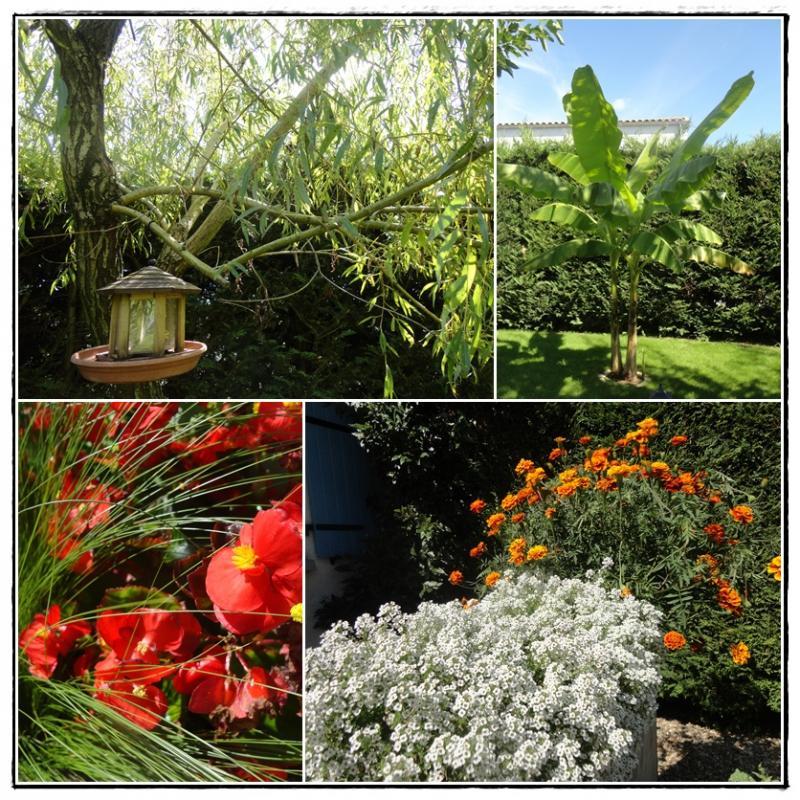 Au jardin en ce 26 ao t 2013 la guillaumette for 6 jardin guillaume bouzignac