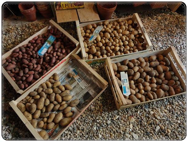 petite r colte de pommes de terre 3 ao t 2012 la guillaumette. Black Bedroom Furniture Sets. Home Design Ideas